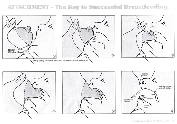 breastfeeding-attachment-diagram