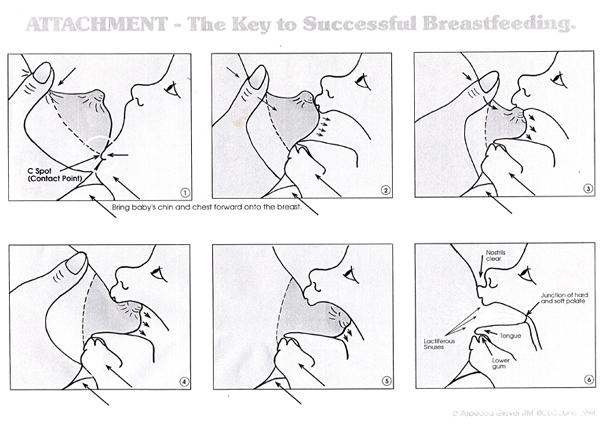 breastfeeding-attachment-diagram